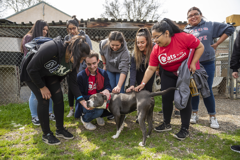 Photo of crowd petting a dog