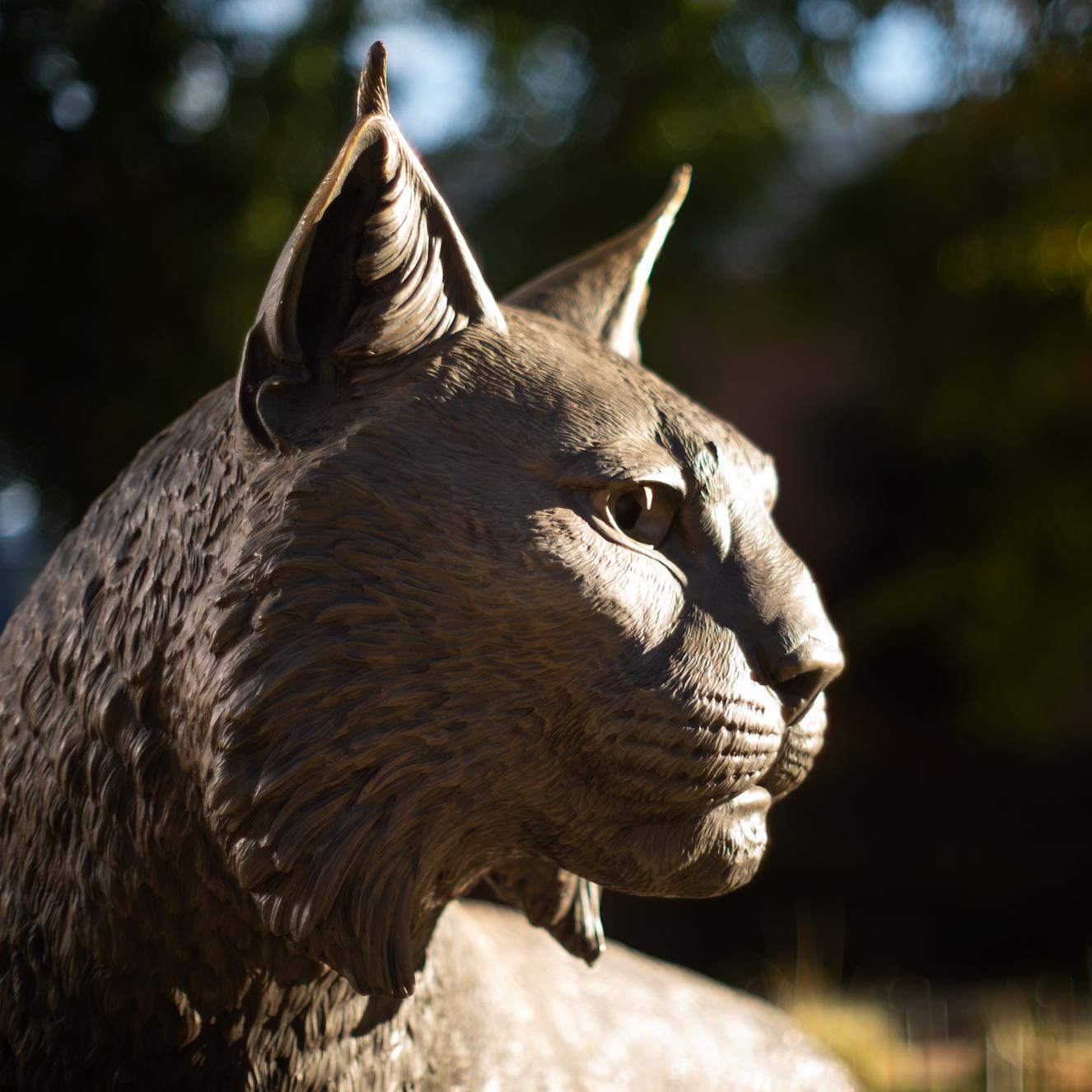 photo of wildcat statue