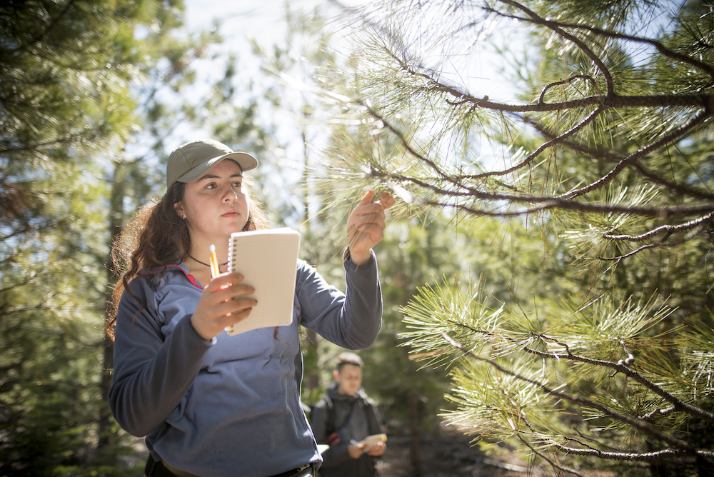 photo of woman observing tree branch