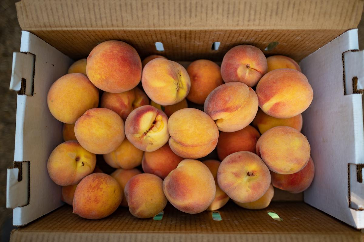 photos of peaches